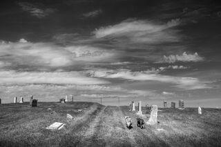 Farm Dogs Walking Cemetery, North Dakota