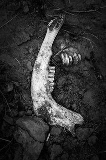 Jaw Bone, North Dakota