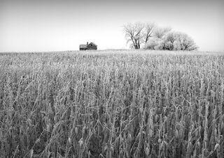 Farmstead House in Corn Field