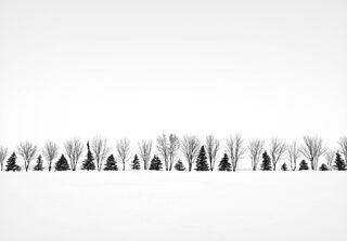 Missing Tree