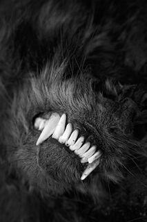 Teeth, North Dakota
