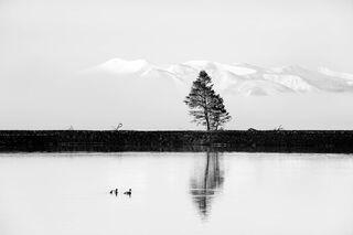 Ducks and Tree