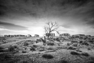 Ghost Town Tree
