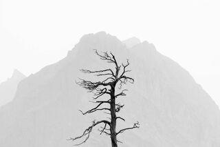 Single Tree in Haze