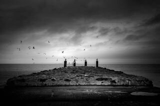 Storm and Gulls