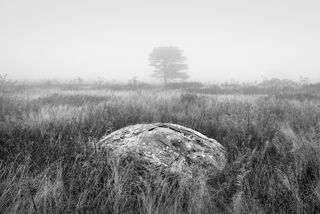 Boulder and Tree in Fog