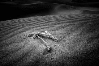 Bird Wing on Sand Dune