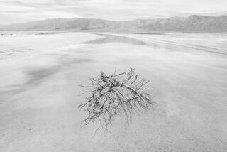 Brush in Salt Flat Flow