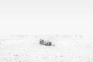 Arrow Weed in Sandstorm