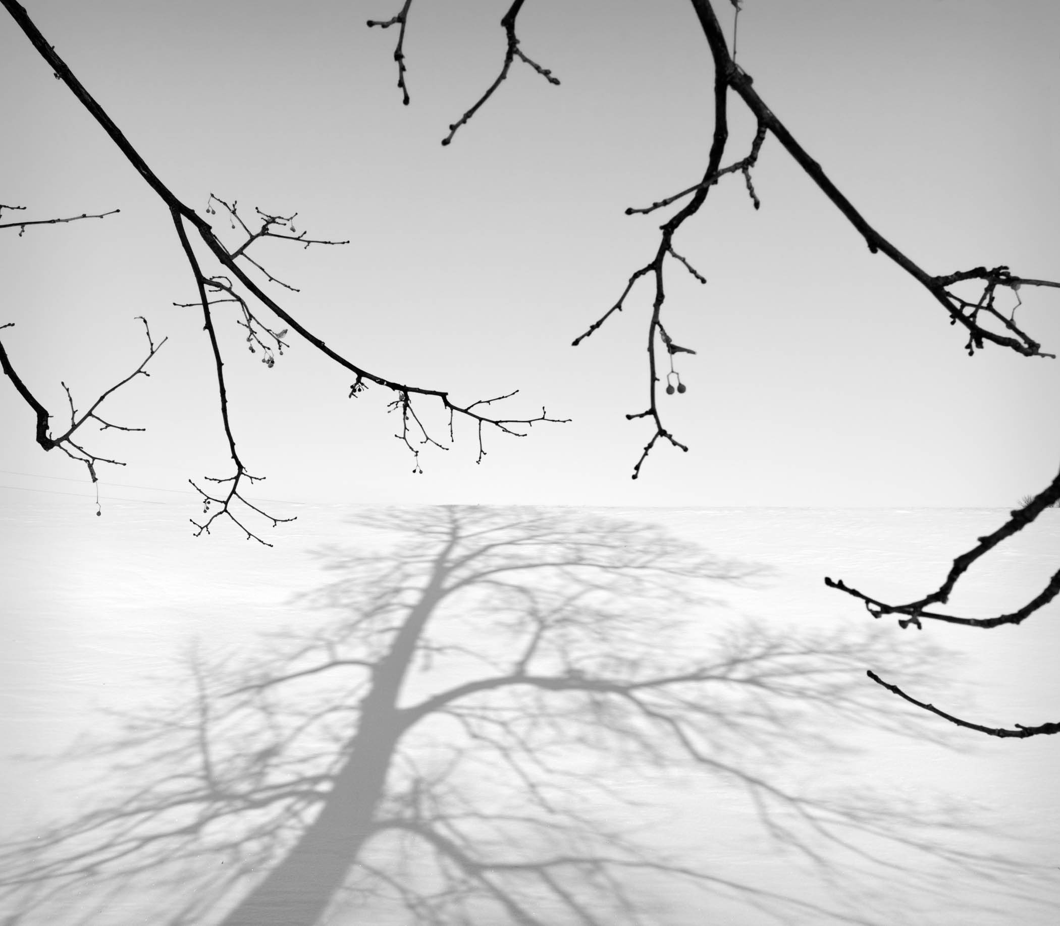 Branches and Shadows, Minesota
