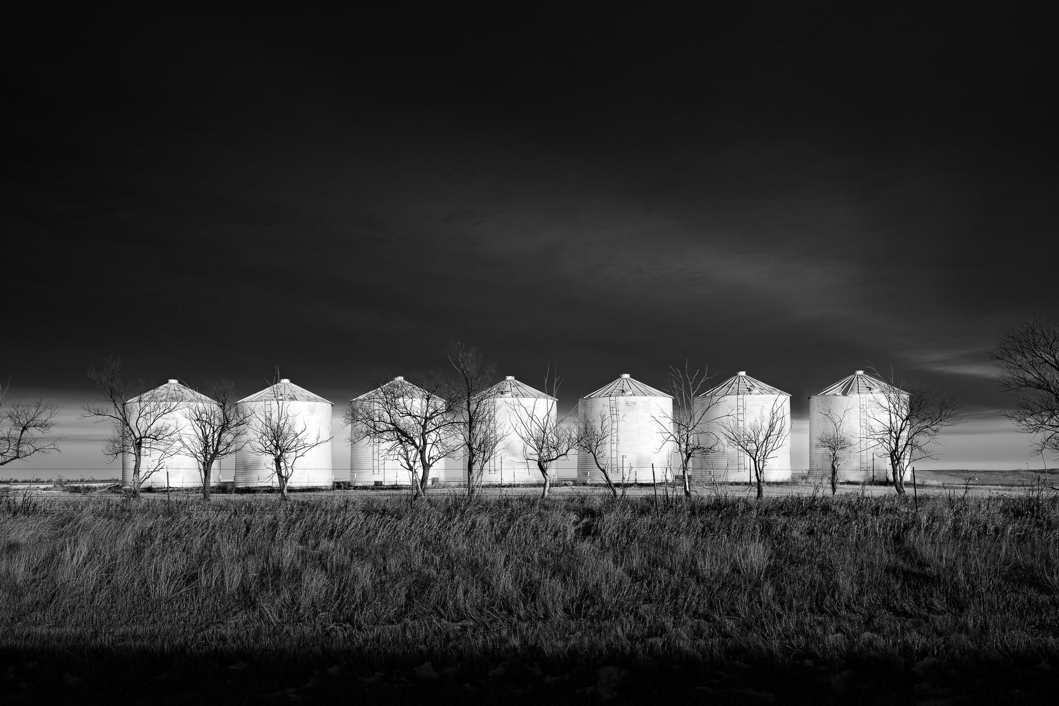 Seven Bins and Tree Row