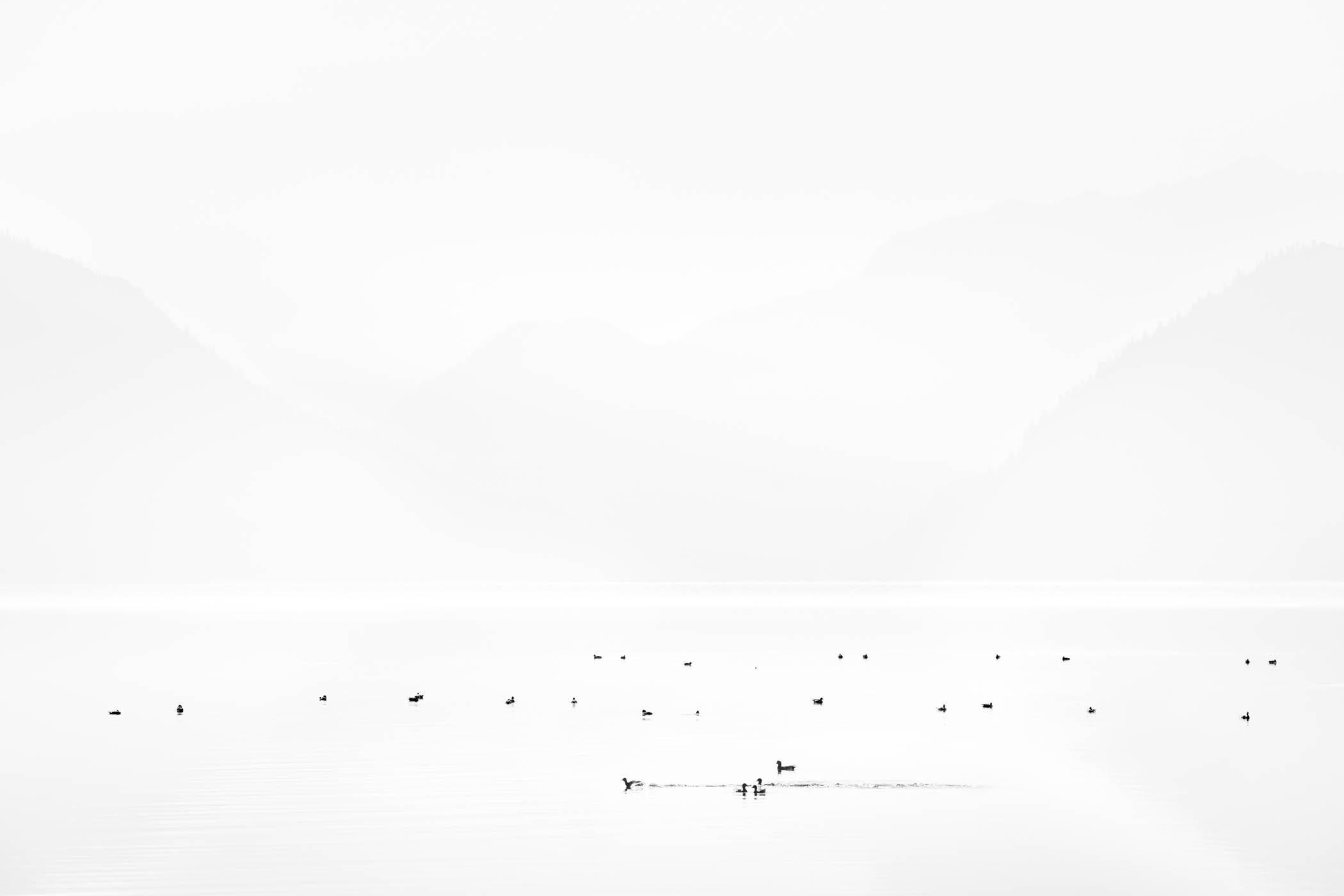 Waterfowl in Haze, Lake Chelan