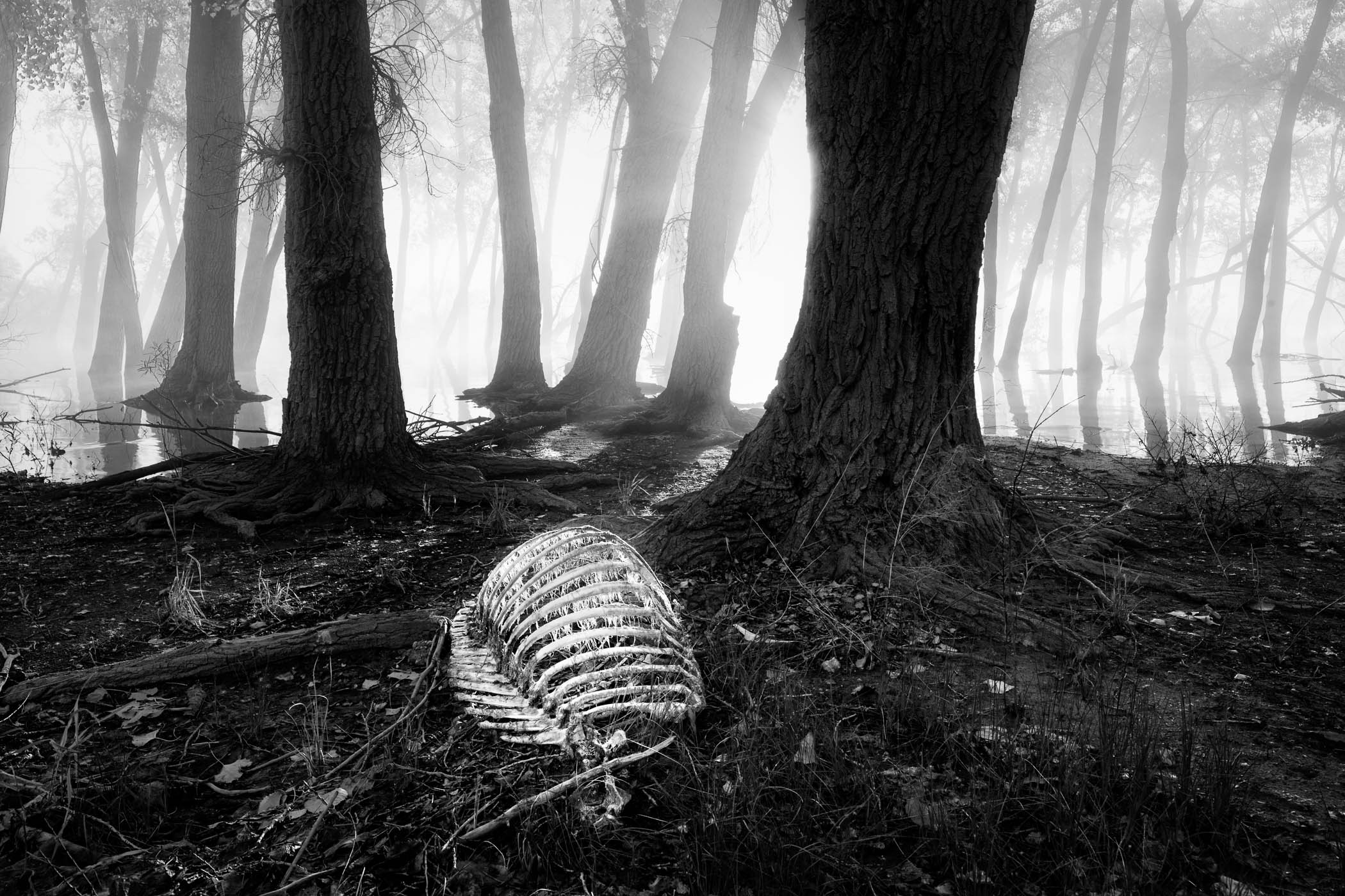 Elk Carcass in Fog