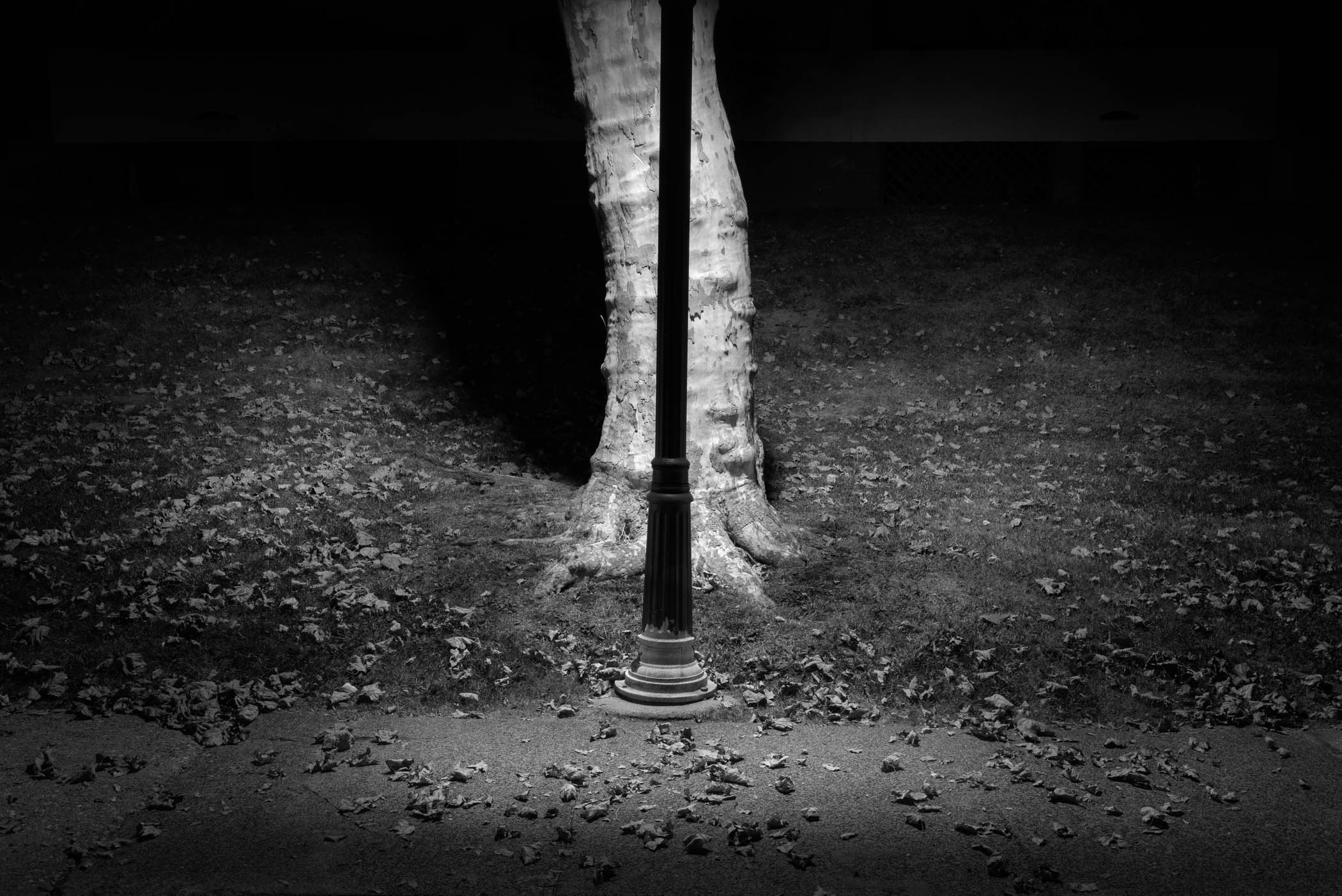 Light Pole and Tree Trunk